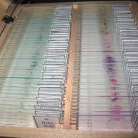 набор микропрепараты по биологии